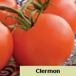 Clermon